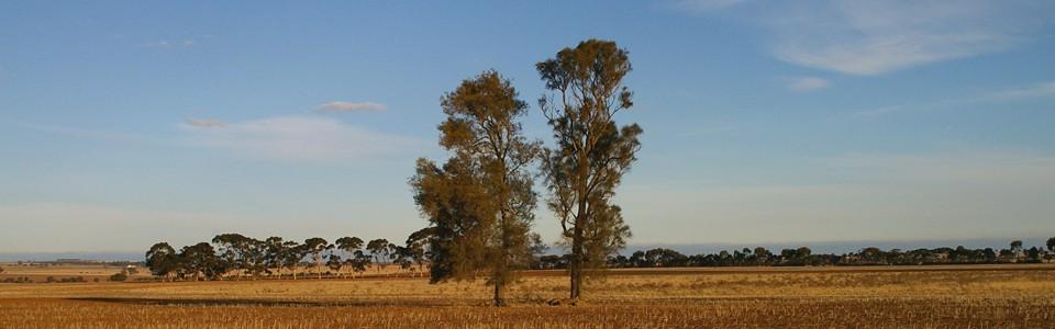 Moolort Plains