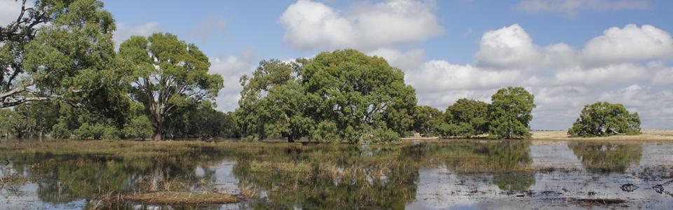 Moolort Plains wetlands